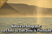 Natura in fotografie: curs foto cu Dan Dinu la PhotoLife