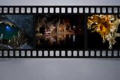 Nikon, partener SpeoArta 2016