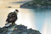 Vant si alte povesti patagoneze. Partea I - de Laura Onea