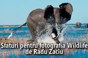 Sfaturi pentru fotografia Wildlife - de Radu Zaciu