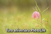 Tura aniversara PhotoLife