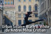 Urban Swan - Black & White - de Andrei Mihai Cristian