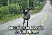 Incursiune in Laponia - de Vlad Eftenie