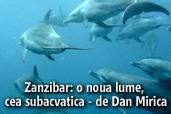 O noua lume, cea subacvatica: Zanzibar - de Dan Mirica