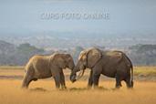 Natura in fotografie - curs foto online cu Dan Dinu