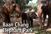 Hai-hui cu Nikon prin Asia de Sud-Est: Baan Chang Elephant Park