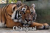 Hai-hui cu Nikon prin Asia de Sud-Est: Regatul Tigrilor din Chiangmai, Thailanda