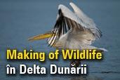 Making of Wildlife in Delta Dunarii