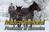 Muzica lemnului - Phototour in Bucovina