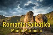 Romania Salbatica: Muntii Macinului