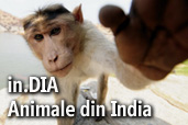 In.Dia - Animale din India