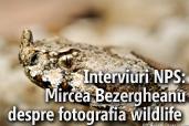 Interviuri NPS: Mircea Bezergheanu despre fotografia wildlife