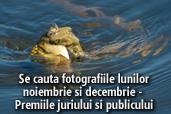 Se cauta fotografiile lunilor noiembrie si decembrie  - Premiile juriului si publicului