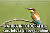 Natura in fotografie - curs foto la Brasov si online cu Dan Dinu