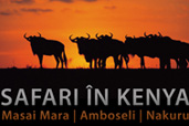 Safari in Kenya cu Dan Dinu