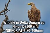 Wildlife in Delta Dunarii cu Nikon D7100 si NIKKOR AF-S 80-400mm