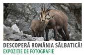 Romania Salbatica: Expozitie foto in Bucuresti