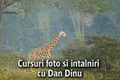 Cursuri foto si intalniri cu Dan Dinu