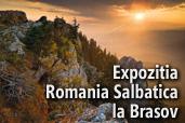 Expozitia Romania salbatica la Brasov - de Dan Dinu