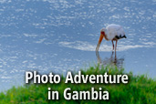 Photo Adventure in Gambia: Workshop de fotografie wildlife alaturi de Costas Dumitrescu