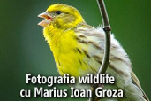 Fotografia wildlife cu Marius Ioan Groza