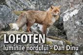LOFOTEN, luminile nordului - Dan Dinu