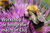 Workshop de fotografie macro in Cluj