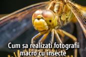 Cum  sa realizati fotografii macro cu insecte