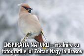 INSPIRATIA NATURII - intalnire cu fotografiile lui Zoltan Nagy la Brasov