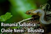 Romania Salbatica: Cheile Nerei - Beusnita