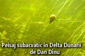 Peisaj subacvatic in Delta Dunarii -  de Dan Dinu