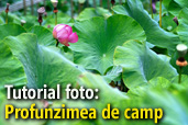 Tutorial foto: Profunzimea de camp