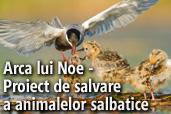 Arca lui Noe - Proiect de salvare a animalelor salbatice