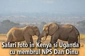 Safari foto in Kenya si Uganda -  cu membrul NPS Dan Dinu