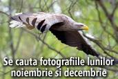 Se cauta fotografiile lunilor noiembrie si decembrie: Wildlife si Aniversare
