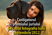 Se cauta fotografia lunii octombrie 2012 - Castigatorul premiului juriului