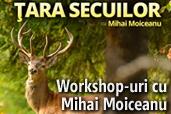 Workshop-uri cu Mihai Moiceanu in Tara Lapusului si Tara Secuilor