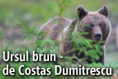 Ursul brun - un articol de Costas Dumitrescu