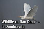 Tura foto wildlife cu Dan Dinu la Dumbravita